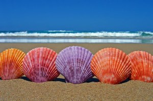 bigstock_Five_Scallop_Sea_Shells_1350445 (2)